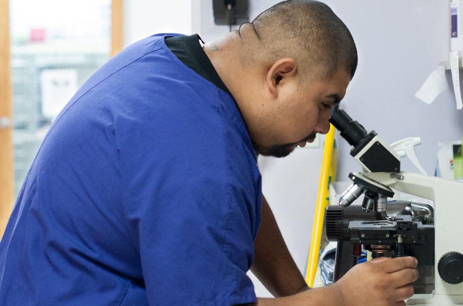 Laboratory Analysis