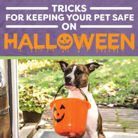 Tricks for keeping your pet safe on halloween